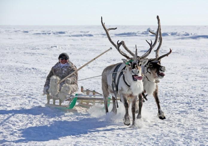 С днем Арктики!